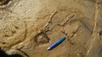 生痕化石.jpg