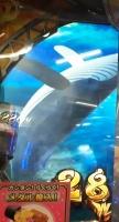 オーシャンジャックポットクジラ.jpg